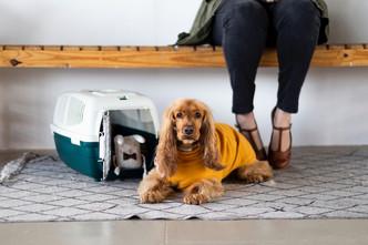 The ultimate App for South African Pet Parents designed by pet-loving entrepreneurs.