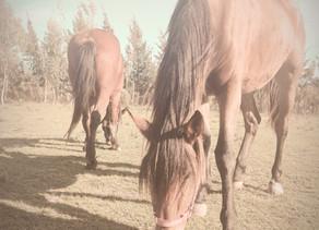 Cómo aprender de los caballos a sobrellevar la cuarentena y convivir en paz