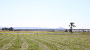 Field Trips 1 & 2: Lockyer Valley and Stones Corner