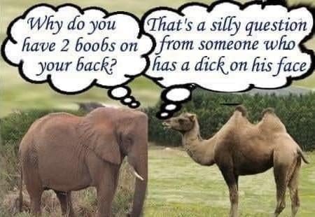 Funny Camel Elephant Meme