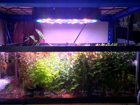 How We Keep Your Plants Healthy Before They Reach Your Aquarium