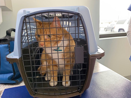 Why Should You Crate Train Your Cat?