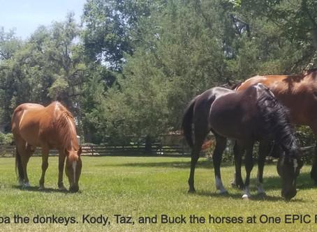 Must Love Horses!