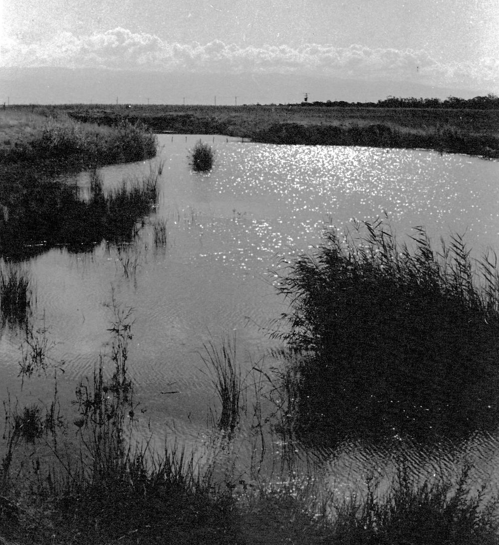 1936 - מראה נחל האסי. ככה״נ אחת התמונות הקדומות ביותר שיש בידינו את הנחל. בשולי האפיק המים עומדים בהם סבך צמחיית עבותה.