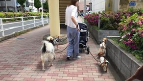 ヒールウォークでお散歩を100倍たのしく♪(埼玉県川口市)