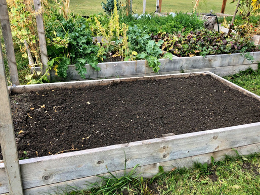 8 Steps to Prepare Your Garden for Winter