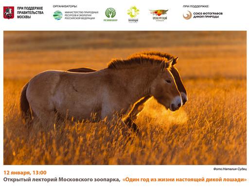 Лекция: «Один год из жизни настоящей дикой лошади».