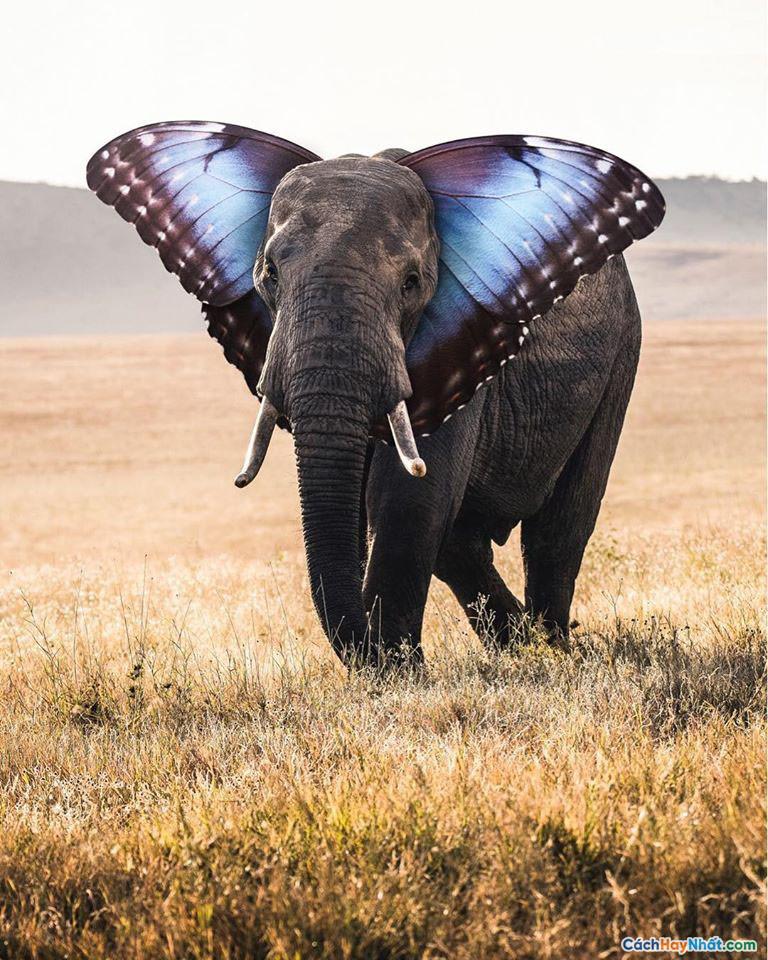 Hình ảnh chế tác con voi bướm của justin peters