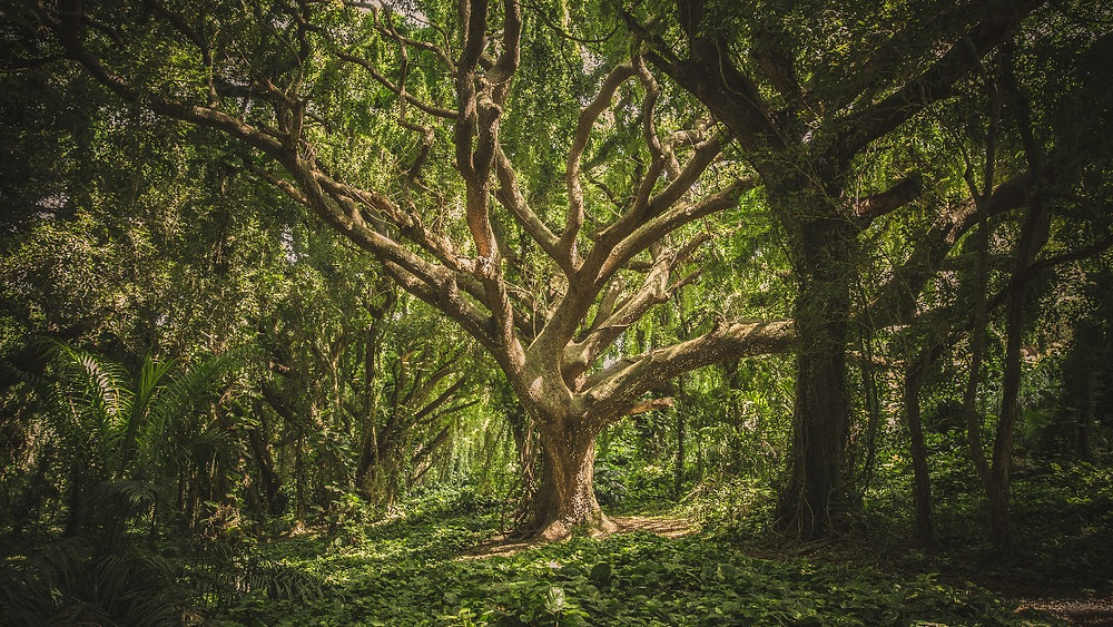 Protecting our native forests and restoring destroyed forests to fight climate change and capture carbon dioxide emissions. Plant trees with the Green Shop. Global Warming. Climate Coping.