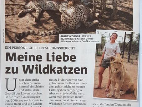 Meine Liebe zu afrikanischen Wildkatzen