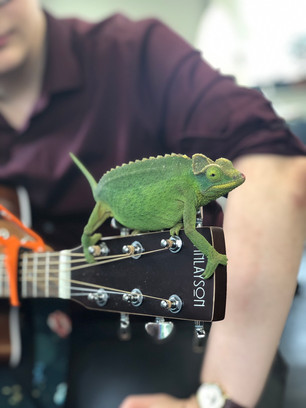 Office Pet Joins in Singing Karma Chameleon
