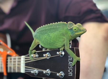 Office Pet Joins in Singing Karma Chameleon