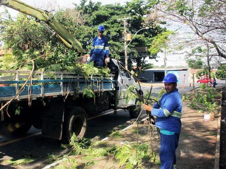 Daae responde sobre podas de árvores realizadas pela CPFL em Araraquara