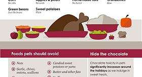 Wondering About SAFE Holiday Foods for Your Pet?