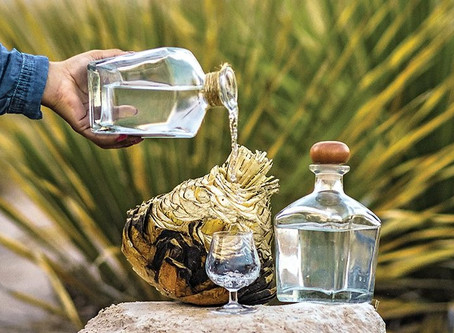 El Sotol: El destilado de Agave típico del norte del país.