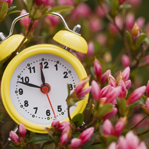 Spring Forward: Reset More than Just Your Clock