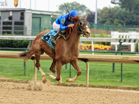 Sally's Curlin: The Late-Running Beauty
