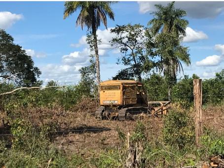 Avanço do agronegócio e descaso: como estão as comunidades no sul do Piauí em tempos de pandemia?