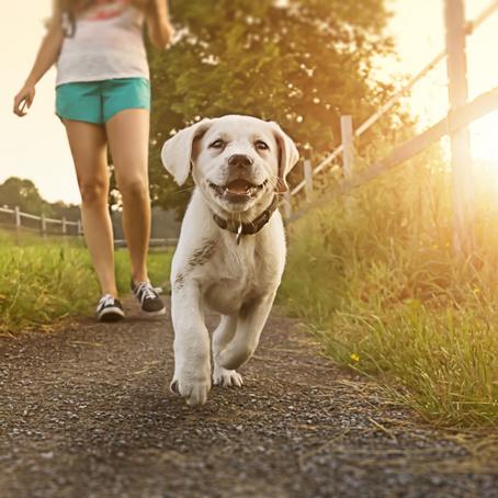¡Cuida de tu mascota este verano!