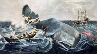 More Leviathan via Moby Dick Essay by Carl Safina