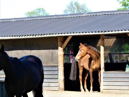 Wat is nou een goede huisvesting voor JOUW paard?