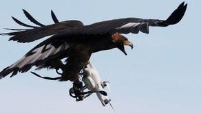 Qui surveille les drones ?