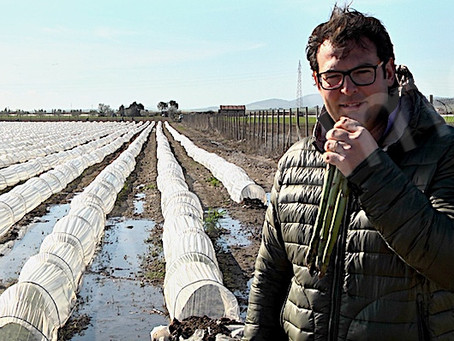 (Ita-Eng) Un asparago termale / A thermal asparagus