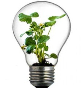 Green electricity shown with lightbulb filled with green plants