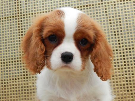 Правда и мифы о щенках