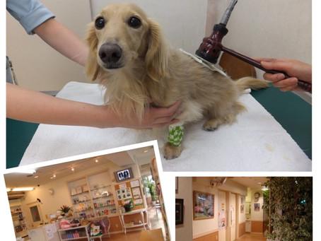動物病院で麻酔をしない歯石除去