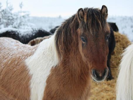 What demotivates horses