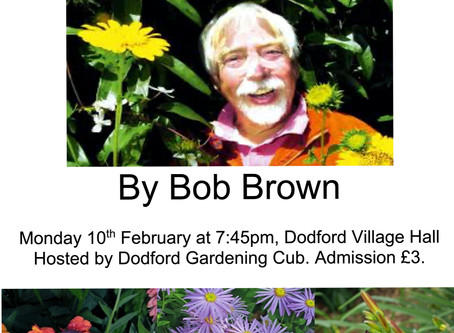 Monday 10th February - Brightening up the garden in August -