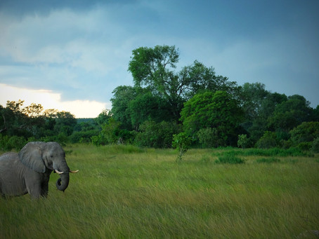 5 Reasons to Visit the Kafue National Park