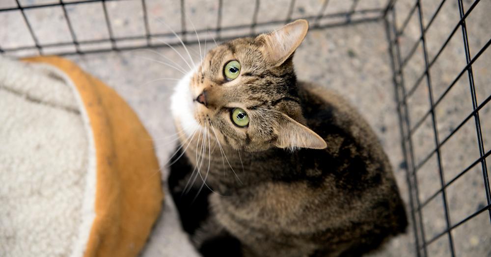 shelter cat kindakind kindness is badass
