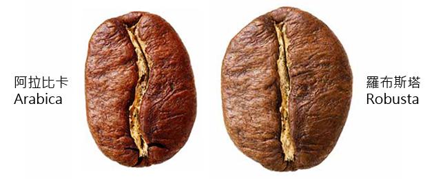 【咖啡小知識】第1回: 咖啡豆是豆類嗎?咖啡是什麼樣的植物?