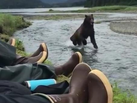 Bear Coming Right At Ya !