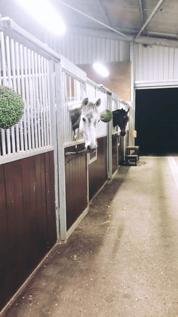 working student horse
