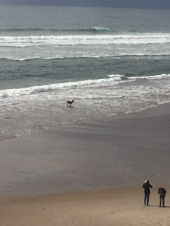 Deer Chased Into Ocean by Dog ..