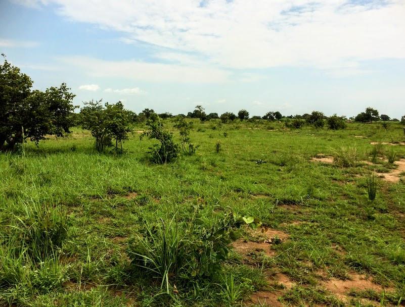 Alakara, Kobulin, Teso, karamoja, uganda, farm