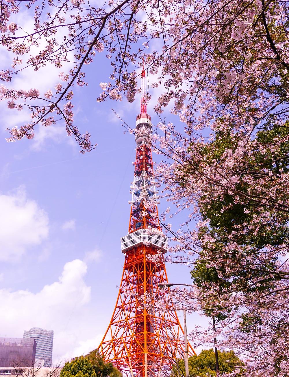 Tokyo Tower primavera