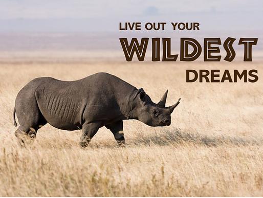 See me. Save me - the key to saving rhinos in Tanzania's Ngorongoro.