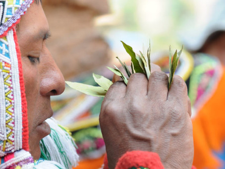 Coca Tea Leaf Reading in The Andes