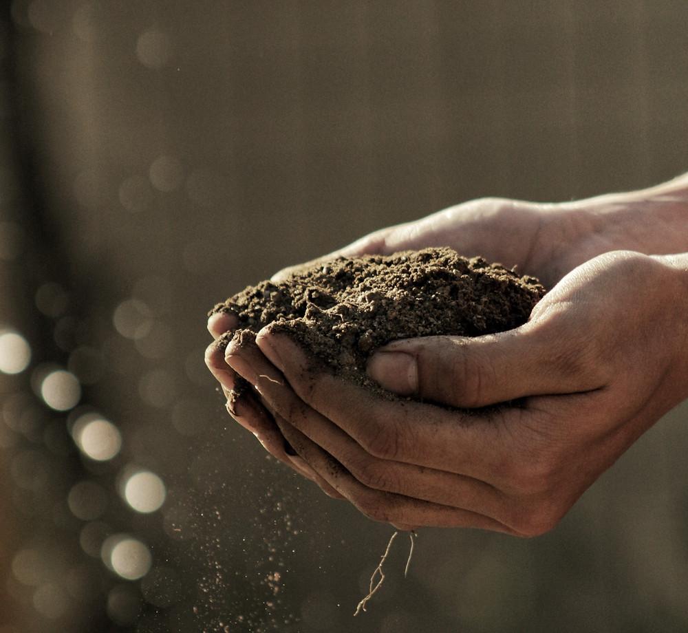 Soil Regeneration is important