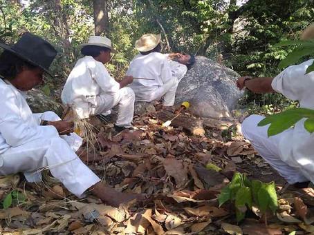 La minería ilegal azota al territorio wiwa