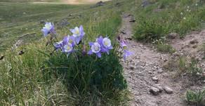 Colorado Trail - Day 4