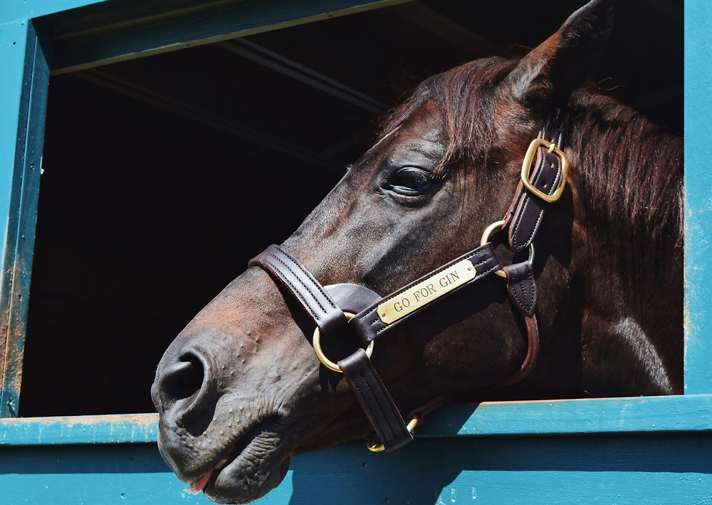 1994 Kentucky Derby winner Go For Gin at the Kentucky Horse Park, Hall of Champions