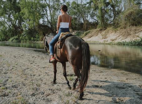 Anyagcsere-zavarok a lovakban