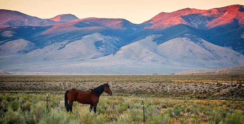 'Not So Sunny Times' On Sunni, My Arabian Horse