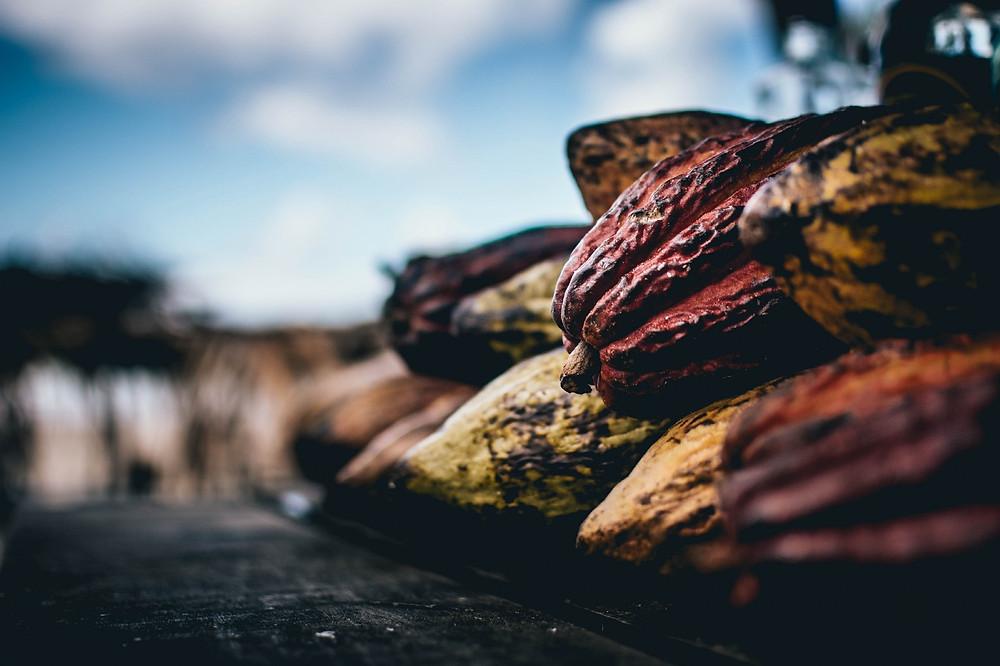 Kakao kabukları.