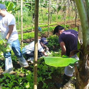 Promotion of Package of Technologies for Integrated Organic Farming in Kalayaan (IOFK), Laguna